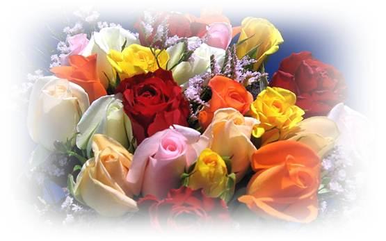 trandafiri_desktop